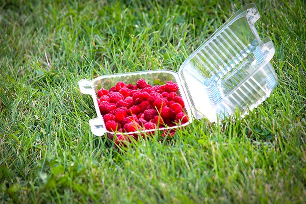 How to Freeze Fresh Berries - raspberries