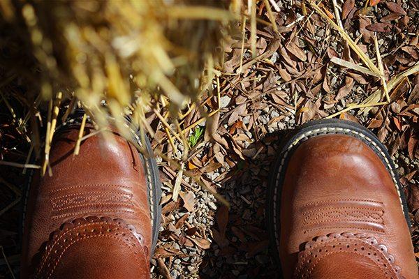 Pumpkin Festival - Kelly's Boots
