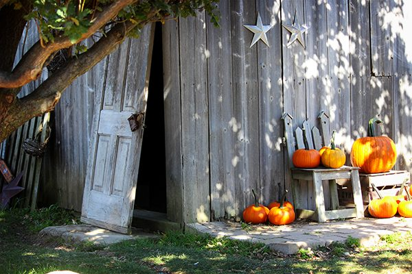 Pumpkin Festival - Old barn