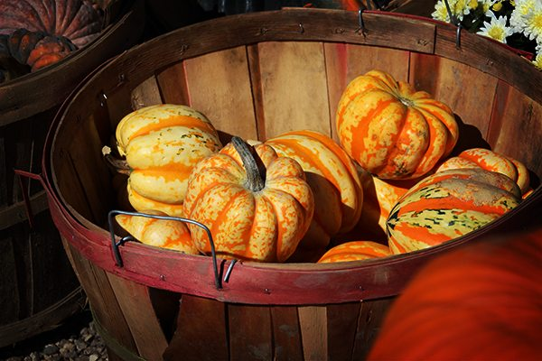 Pumpkin Festival - little pumpkins