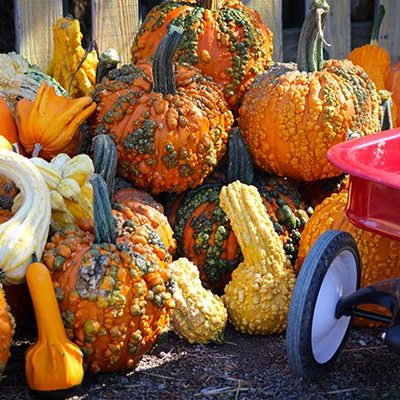 Lincoln Ridge Pumpkin Festival