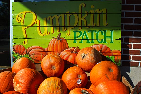 Trader Joes Pumpkin Patch