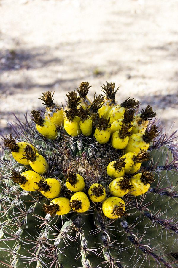 Arizona Trip_100