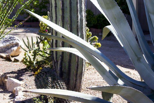 Arizona Trip_97