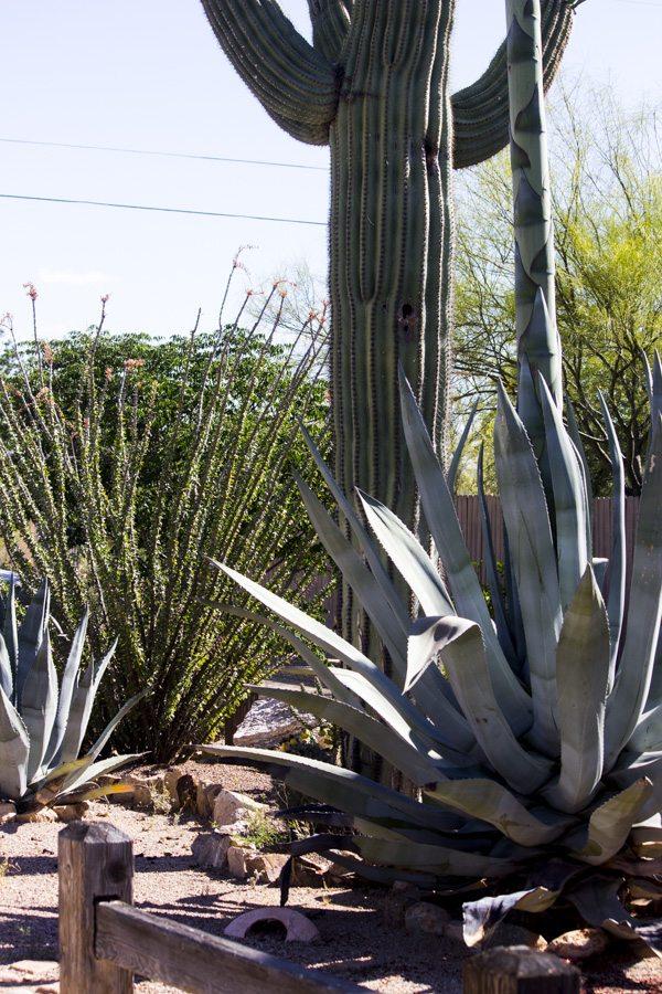 Arizona Trip_99