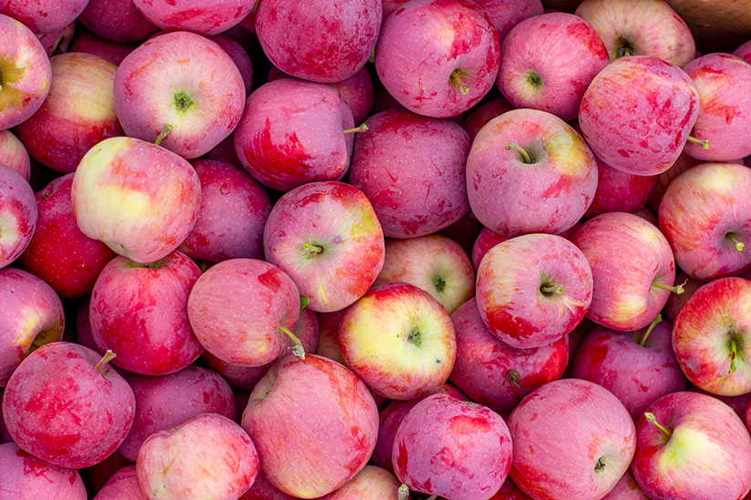 Bunch of fresh querina apples in farmer's market on display